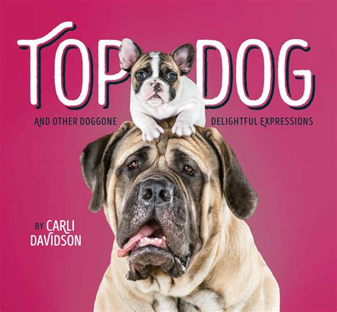 top dogs portraits and stories books top and other doggone delightful expressions photo