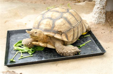 how many times to feed a how many pellets to feed eared slider wiring diagrams wiring diagrams