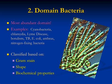 bacteria chapter ppt