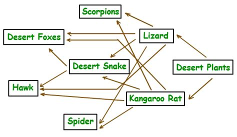 food web flowchart food web flowchart create a flowchart