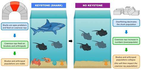 keystone species bioninja