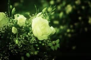 gambar mekar menanam sinar matahari daun bunga