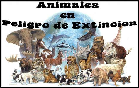 imagenes de animales en peligro de extincin 07 view image cuidemos los animales