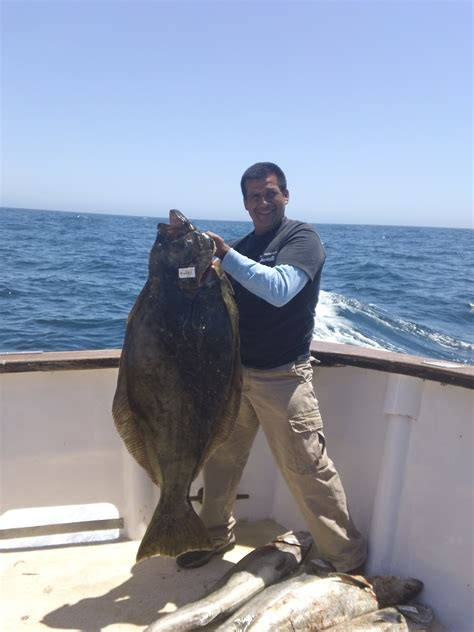 Record California Tagged World Record California Halibut Channel Islands Sportfishing Fish Report For