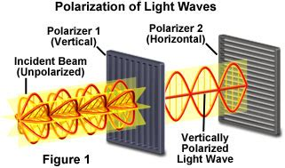 Polarization Of Light by Electromagnetism Why Doesn T The Magnetic Field Polarize