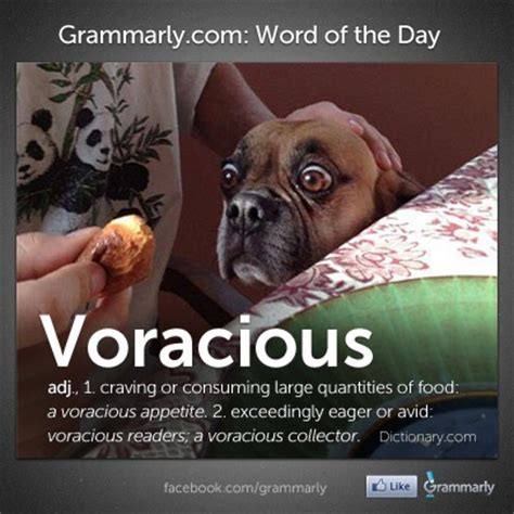 Hump Days Hair Days With Krista Megs Make Up Reviews by 9 Best Images About Grammarly Word Of The Day On