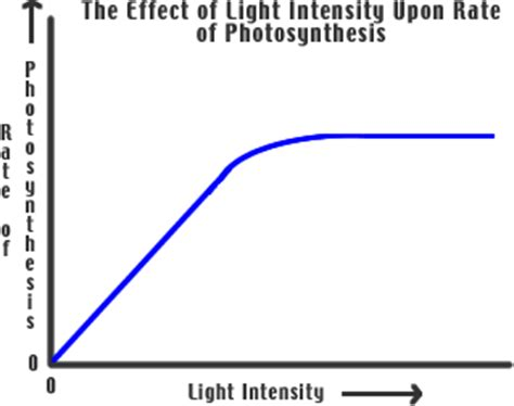 How Does Light Intensity Affect Photosynthesis by How Light Intensity Affects Photosynthetic Rate
