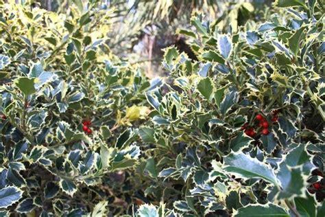 offerte piante da giardino casa moderna roma italy piante prezzi