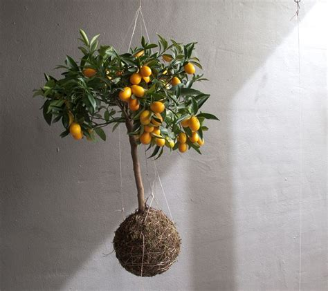 string planters   trend bringing  closer  nature