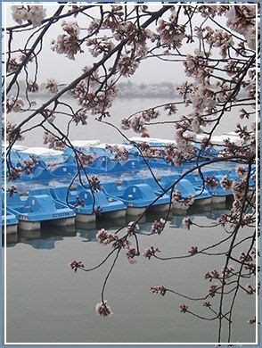 paddle boat rental central park 1000 ideas about paddle boat on pinterest abandoned