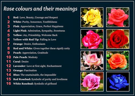 list of colours and their meanings daveswordsofwisdom com beautiful rose colors and their