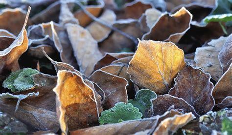 Pflanzen Winterfest Machen by Pflanzen Winterfest Machen Ma 223 Nahmen Ergreifen Garten