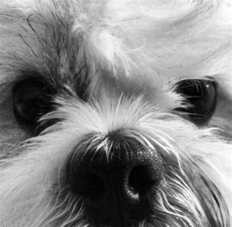 brachycephalic breeds travel for pets can be stressful particularly for snub nosed dogs south florida