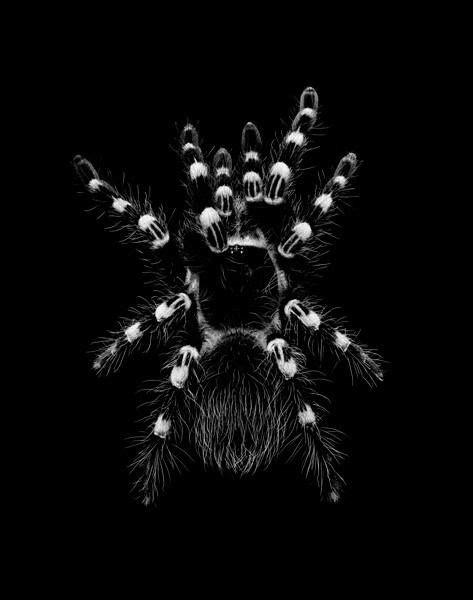 Ad Infinitum | all_in_black. | Zwierzęta, Insekty i Węże