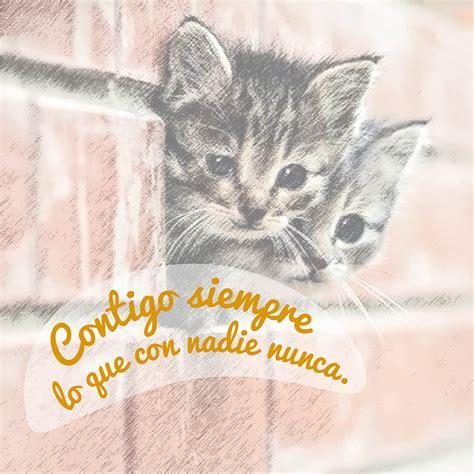 imagenes lindas navideñas 10 im 225 genes de gatitos tiernos con frases lindas para
