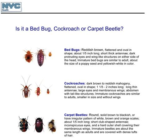 Carpet Beetle Vs Bed Bug by Carpet Beetle Vs Bed Bug Pictures Carpet Vidalondon