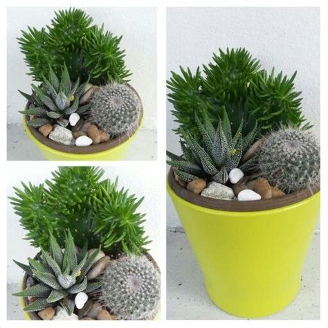 succulent and cactus container garden container garden
