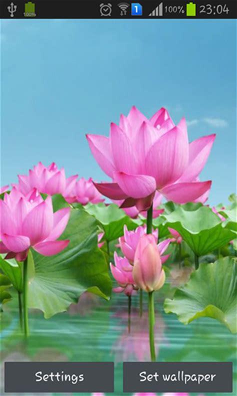 testo lotus flower lotus pond live wallpaper for android lotus pond free