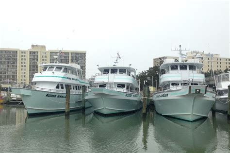 virginia beach boat rides 14 best dolphin watching images on pinterest virginia