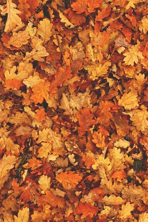 tumblr themes free autumn fall wallpaper tumblr