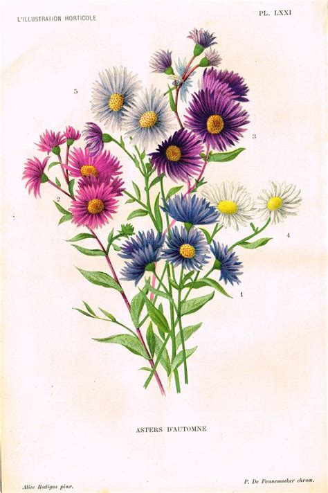 aster flower tattoo designs 1000 ideas about aster flower tattoos on