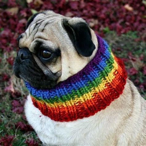 rainbow pug rainbow pug funky monkeys