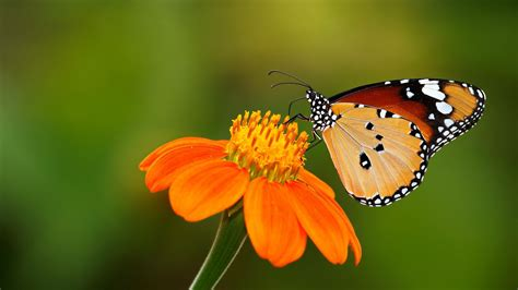 wallpaper flower and butterfly butterflies and flowers wallpaper wallpapersafari