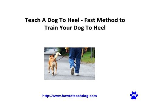 how to teach a puppy to heel teach a to heel fast method to your to heel