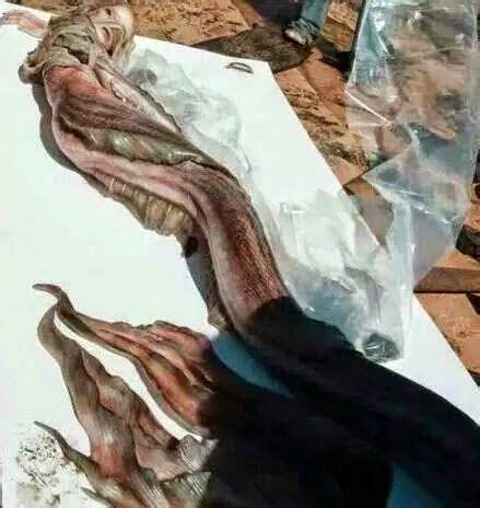 mermaid body found mermaid body found anew photo viral real or hoax