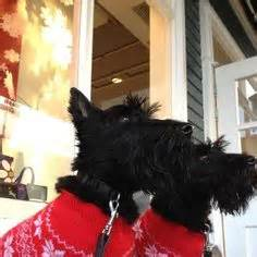 Radley Gift Card - 1000 images about radley on pinterest radley bags scottie dogs and radley purse