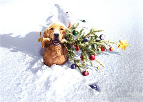 dog  tree  snow box   funny christmas cards  avanti press
