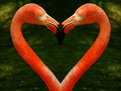 Flamingo Home Decor Flamingo Heart Photograph By Myrna Bradshaw
