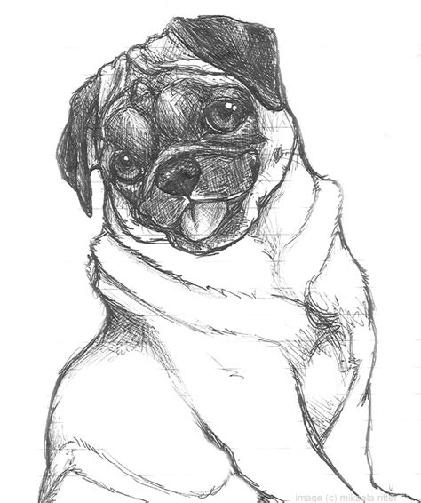 sketch of a pug nikkiburr pug sketch by nikkiburr on deviantart