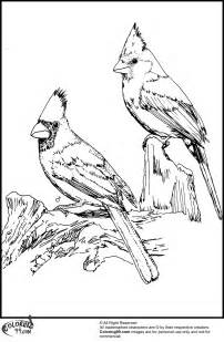 cardinal coloring page american cardinal coloring pages team colors