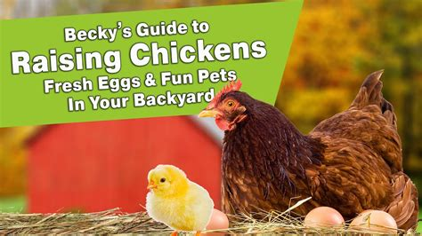 raising chickens for eggs in your backyard becky s guide to raising chickens fresh eggs fun pets