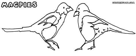 magpie bird coloring page magpie bird coloring page sketch coloring page