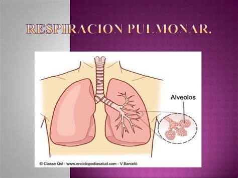 imagenes de respiracion yoga respiracion pulmonar medina
