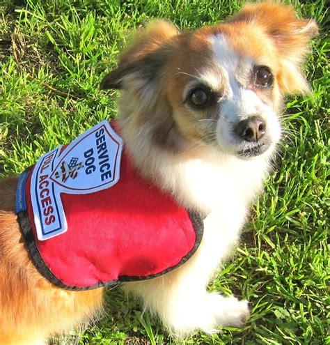 small service dogs premium small service vest