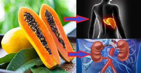 Liver Detox Papaya by How To Eat Papaya Seeds To Detoxify The Liver And Kidneys