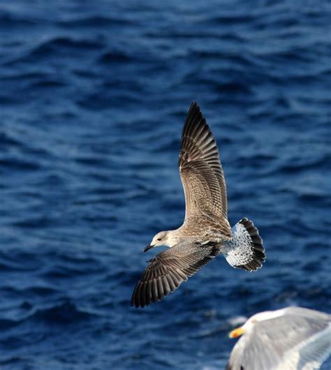 ferry boat agia marina nea styra birdwatching in greece august 2013