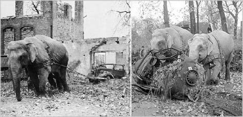 world war ii battles zoo allied bombing of zoos during wwii environmental effects of the total war