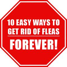 how to get rid of fleas on bed how do i get rid of fleas in my bed pictures to pin on