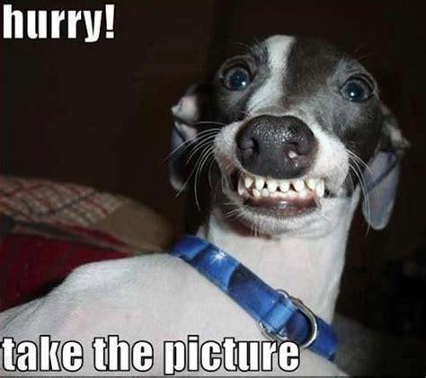 Smile Dog Meme - pics for gt smile dog memes