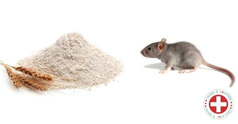 how to get rid of mice in your backyard how to get rid of mice in your home recipe health and