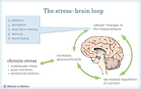 Brain Stress - the brain and stress what it does and why adler astro