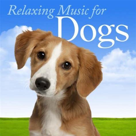 relaxing for dogs relaxing for dogs musique pour calmer chien bizous pour votre chien