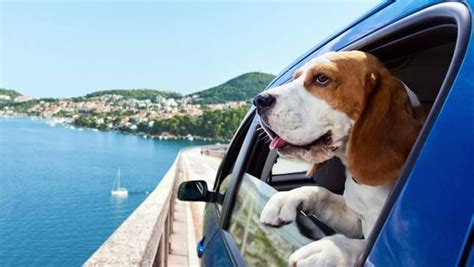 traveling with puppy how to take your anywhere with the help of these 6 smartphone apps mnn