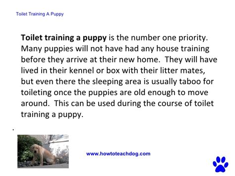 easiest way to potty a puppy how to house a potty