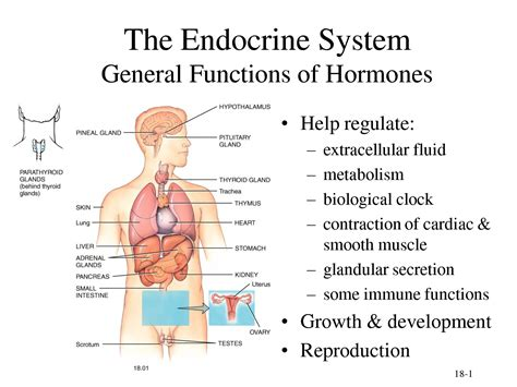 Endocrinologist Description by What You Need To About Hormone Imbalance Part 1 Goddess Ignited