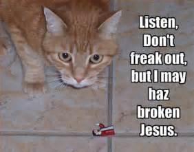 Jesus Cat Meme - 30 best lolcats ever smosh